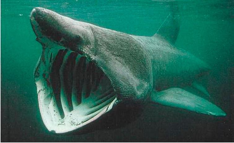 Найдены останки древней акулы, которая жила во времена динозавров