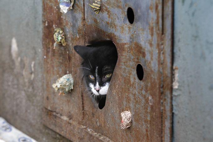 В Златоусте строители замуровали заживо котенка