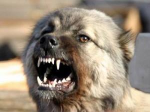 В Златоусте хозяин заплатит 30 тысяч за действия своей собаки